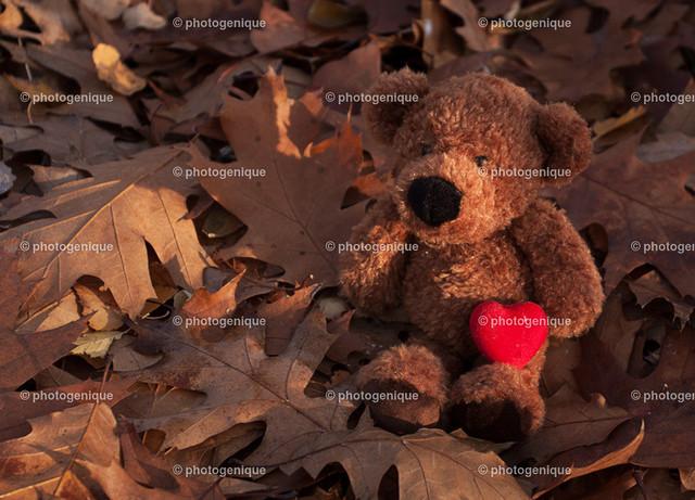 Teddy-Bär im Laub mit Herz | brauner Teddy-Bär sitzt im Herbslaub mit rotem Herz im Arm bei Tageslicht