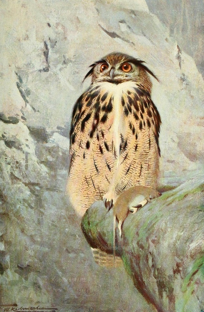 Kuhnert_ F.W. (1865-1926) - Wild Life of the World 1916 - Horned Owl