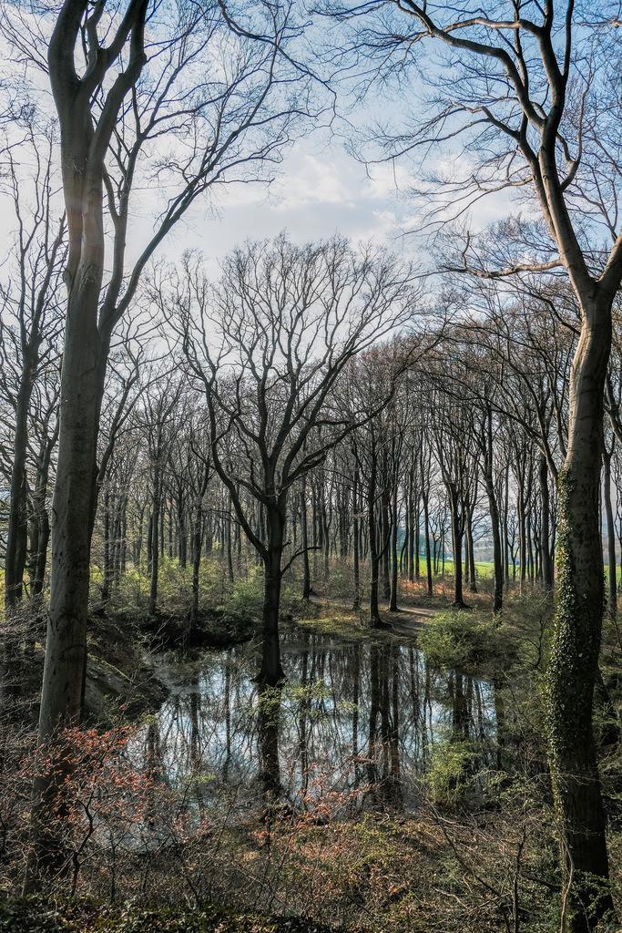 Teich im Teutoburger Wald in Bielefeld-Ubbedissen | Kleiner Teich im Teutoburger Wald am Ubbedisser Berg im Frühling.