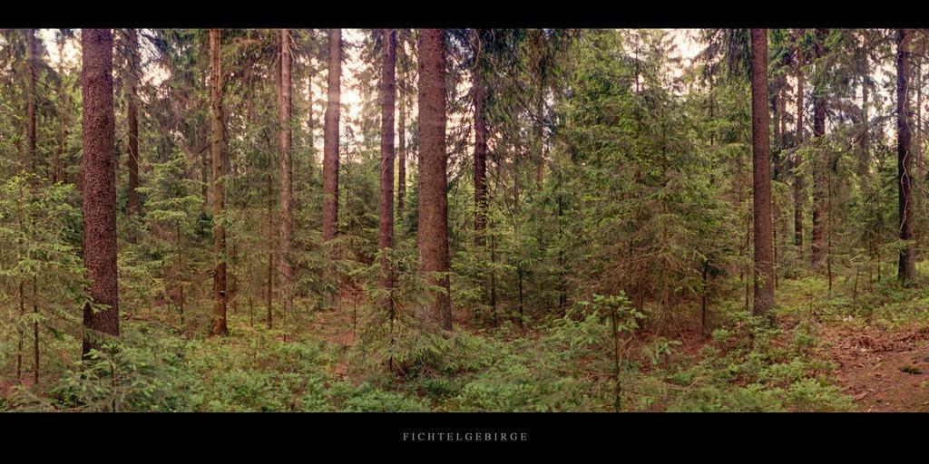 Fichtelgebirge | Nadelwald im Fichtelgebirge