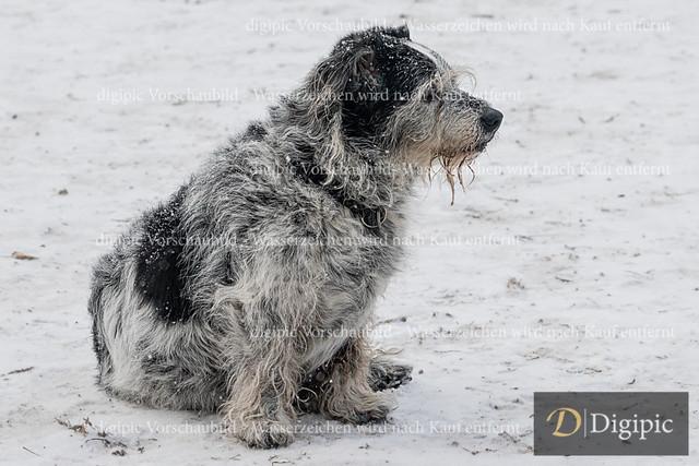 Hund 6 - Vorschaubild | Mischlingsrüde auf der Hundewiese