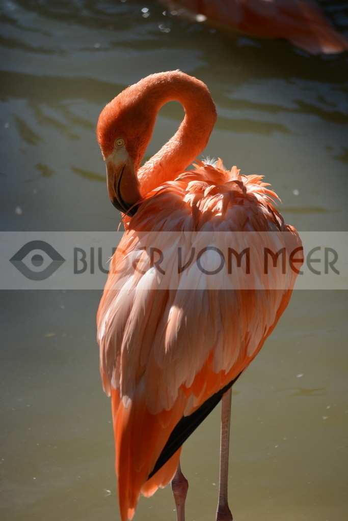 Flamingo Art Bilder | Red Flamingos Art Bilder