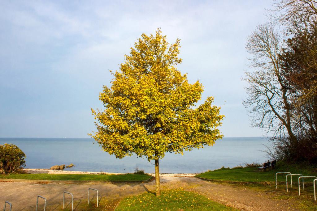 Strand in Ohrfeldhaff   Herbstlicher Baum am Strand in Ohrfeldhaff