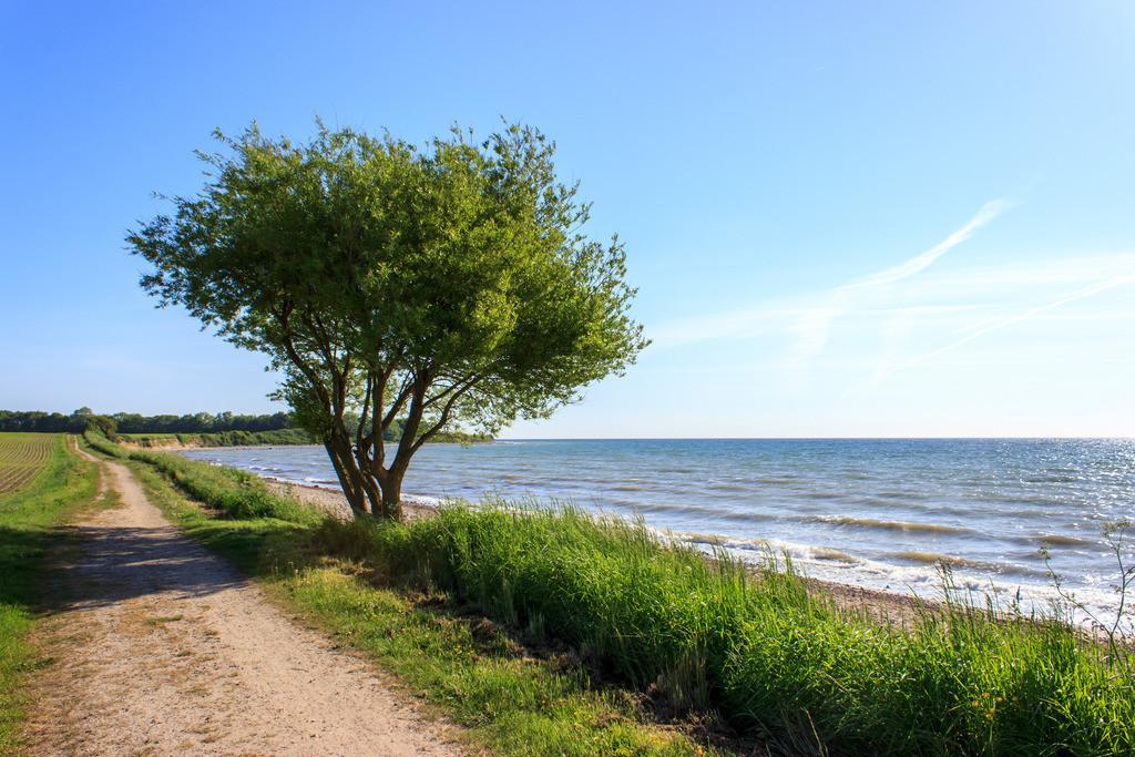 Strand in Hökholz   Weg am Strand in Hökholz im Frühling