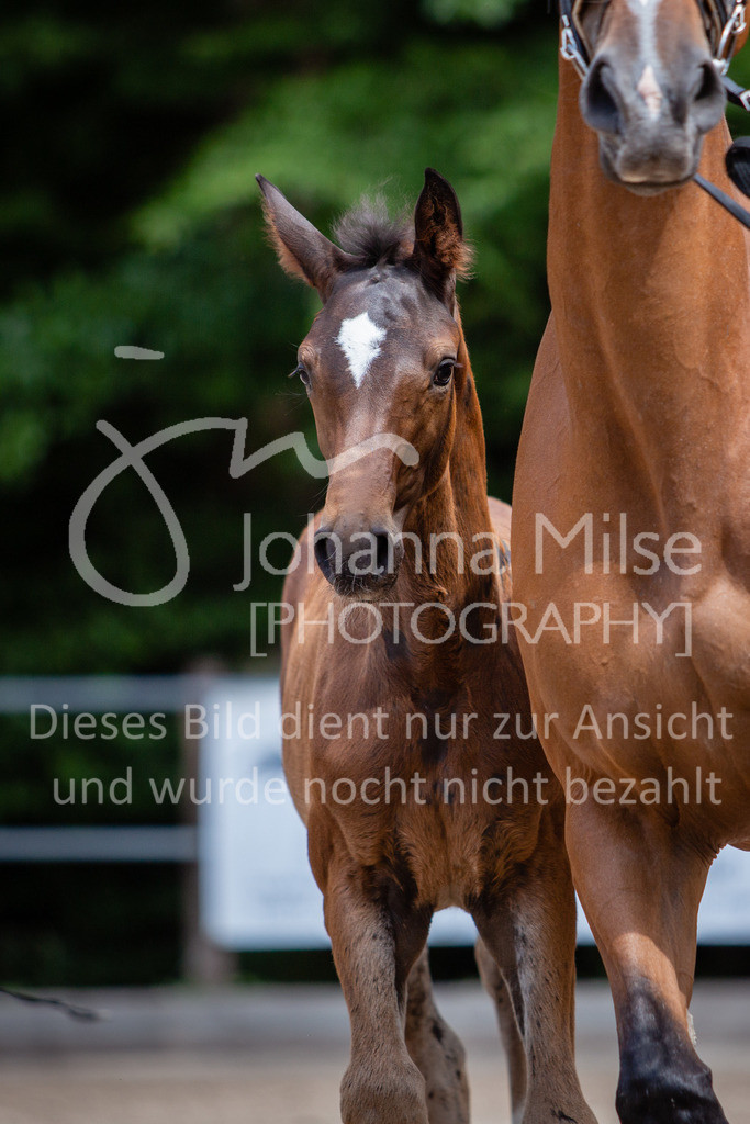 190703_Fohlenschau_WuC-074 | Holsteiner Fohlenschau 2019 - Stutfohlen
