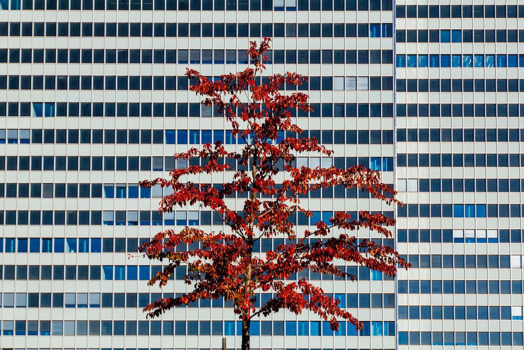 JT-151001-0331   Dreischeibenhaus, ehemaliges Thyssen Verwaltungsgebäude, in der Innenstadt von Düsseldorf, am Ende der Nobel Einkaufsmeile, Königsallee, herbstlicher Baum