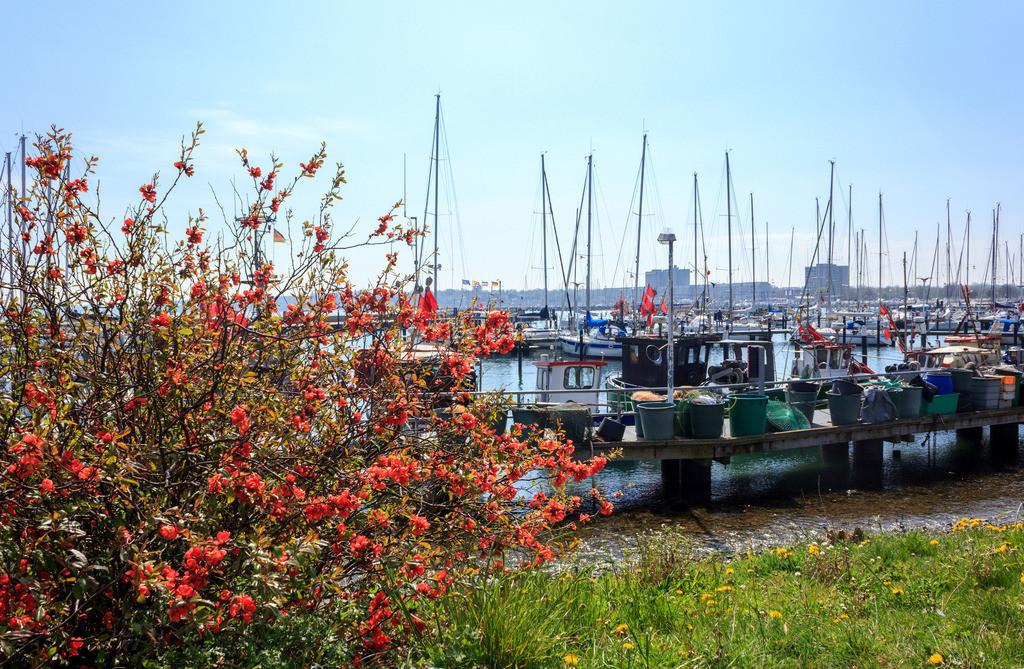 Hafen in Strande | Frühling in Strande