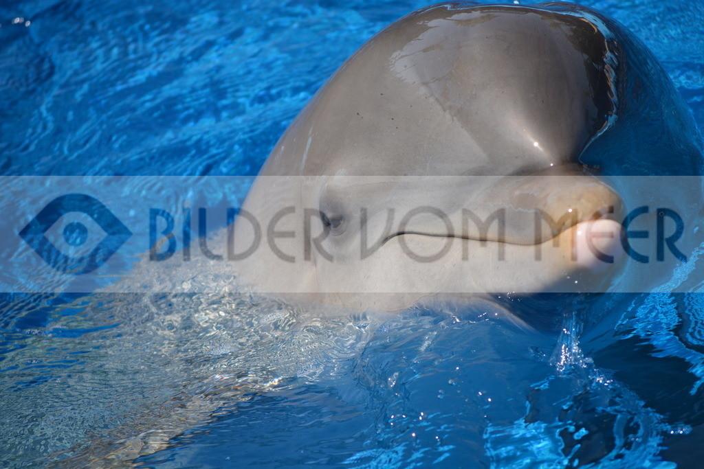 Fotoausstellung Bilder vom Meer   Delfin Bilder: wie das Spass macht