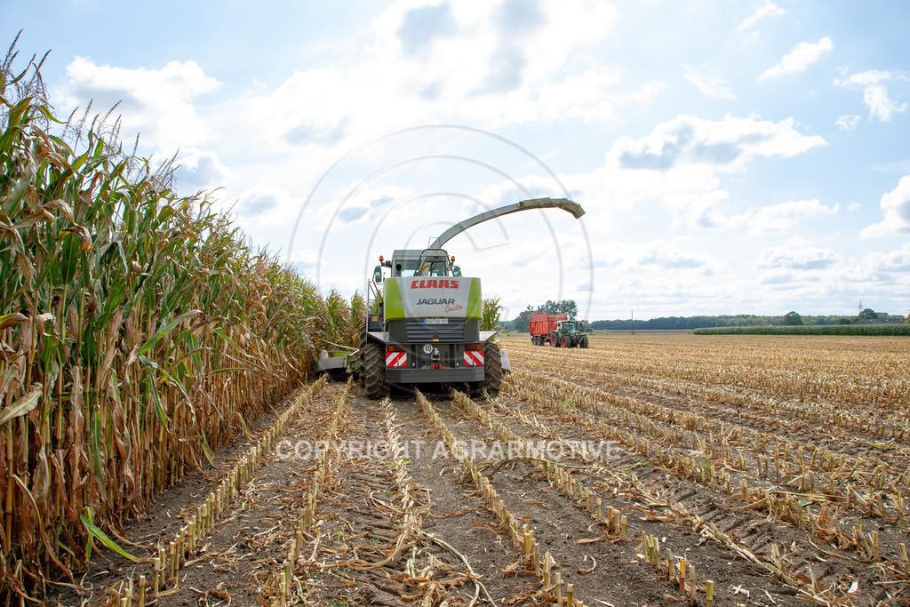 20080914-IMG_9033 | Silomais wird gehäckselt - AGRARFOTO Bilder aus der Landwirtschaft