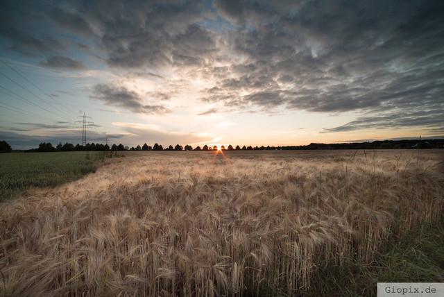 Sommersonenwende Raderbroich | Sonnenuntergang zur Sommersonnenwende in Raderbroich an einem Kornfeld