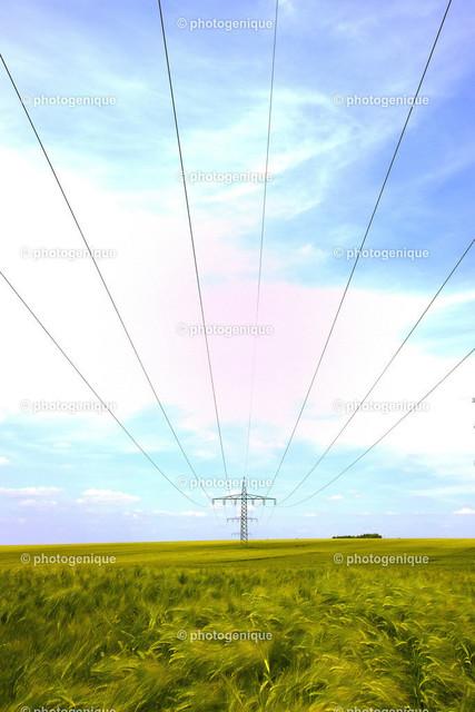 Strommast im Feld   Weitwinkelaufnahme eines einzelnen Strommastes in einem noch grünen Getreidefeld bei Tageslicht vor einem hellen Hintergrund