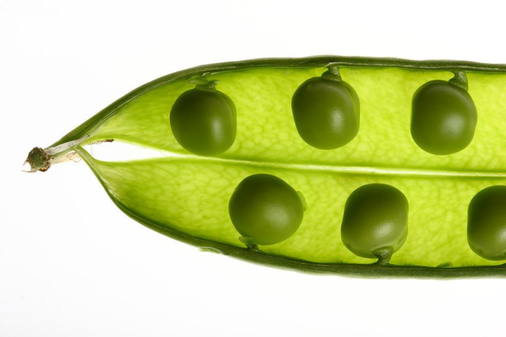 Gemuese | Gemüse. Erbsenschote, grüne Erbsen in der Schote. (Pisum sativum)
