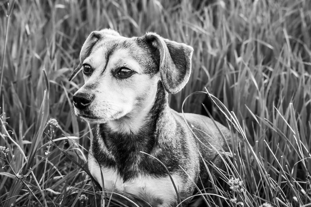 dogs--elmar.pics_00659