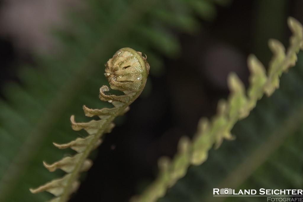 Newzealand Fern 8