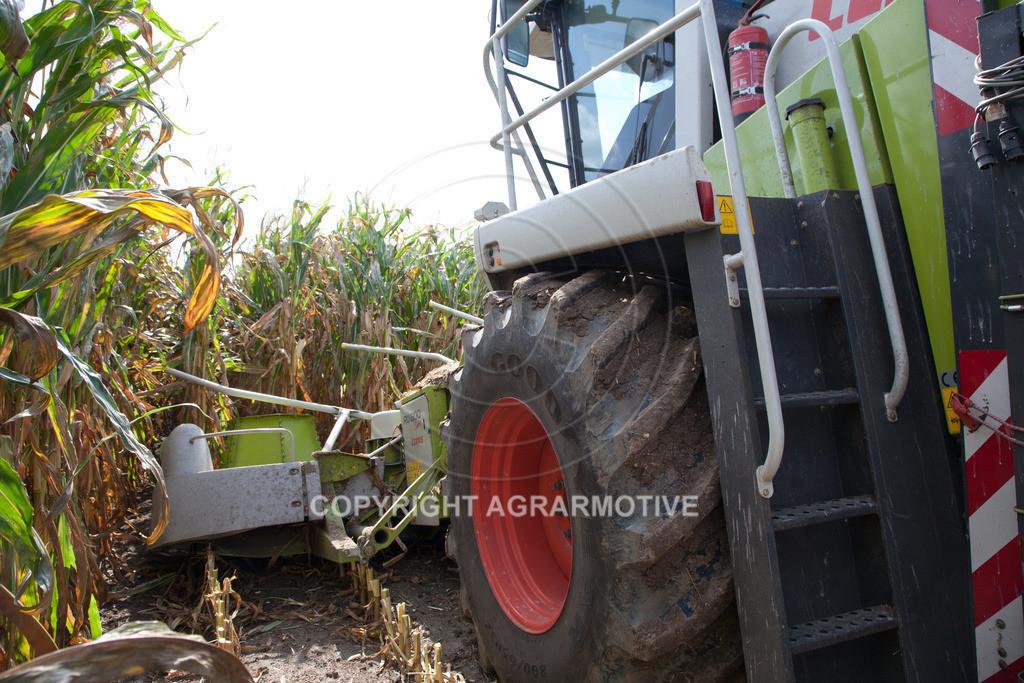 20080914-IMG_9030 | Silomais wird gehäckselt - AGRARFOTO Bilder aus der Landwirtschaft