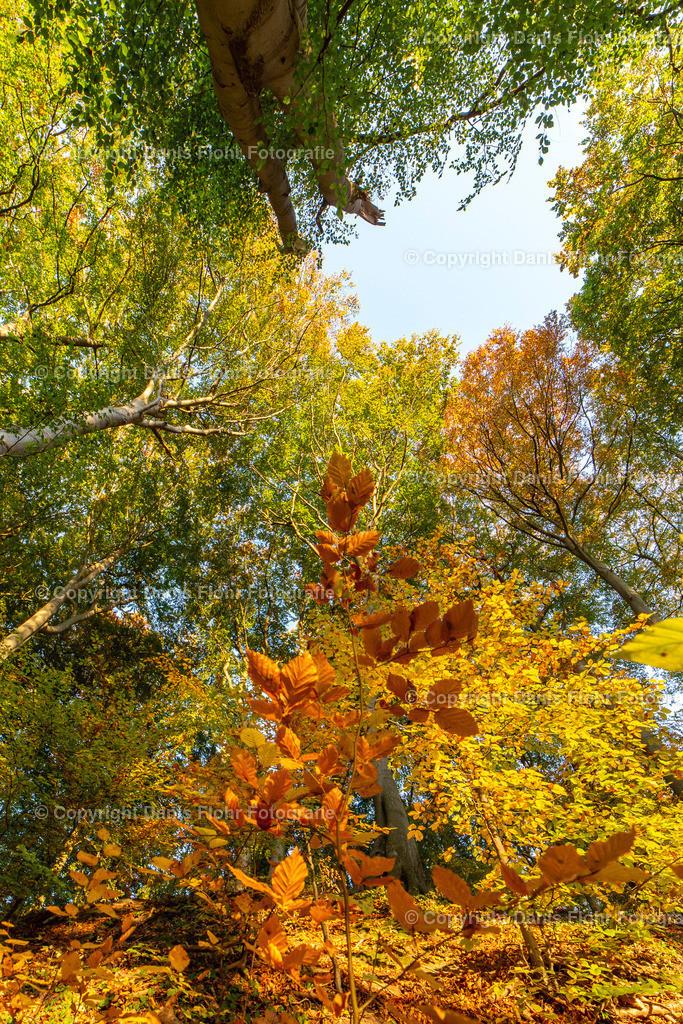 Herbstblick | Ein Blick nach oben während eines Waldbesuches