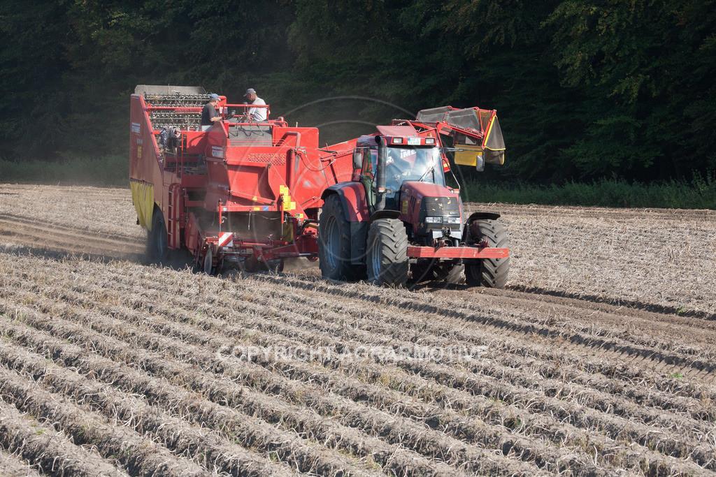20110929-IMG_6074 | Ernte auf einem Kartoffelfeld - AGRARBILDER