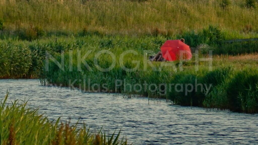 Roter Sonnenschirm im Deichgras   Ein roter Sonnenschirm im Deichgras hinter dem Deich auf der Wattseite der Nordseeinsel Texel.