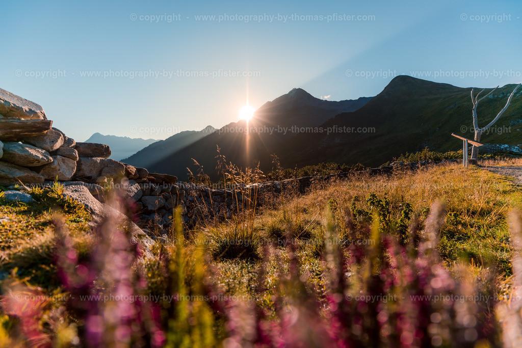 Ahorn Sonnenaufgang Spätsommer-24