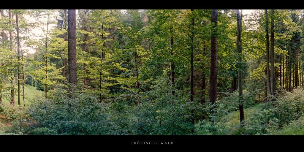 Thüringer Wald | Mischwald mit Fichten im Thüringer Wald