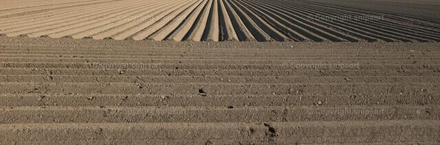 Umgepflügte Erde | Umgepflügte Erde mit exakten geometrischen Linien und Fluchtpunkt