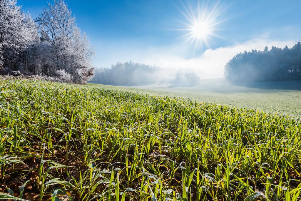 Morgentau | Morgentau auf der Wiese