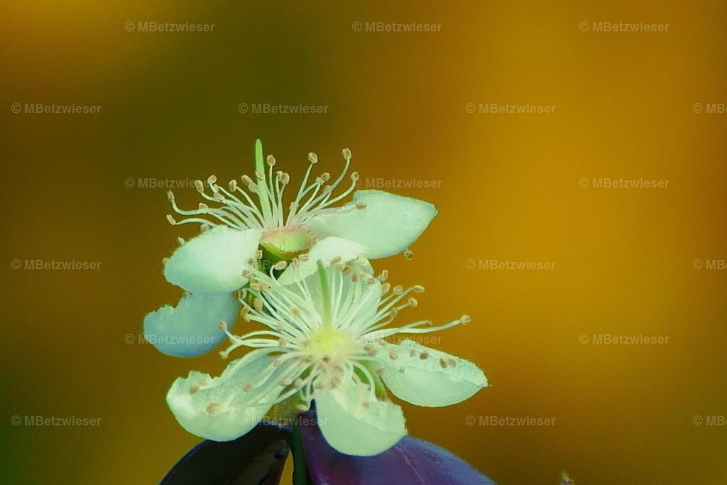 P1000705 | Eine unbekannte Blüte
