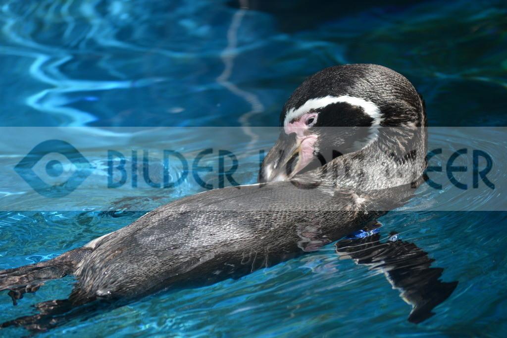Bilder vom Meer | Pinguine Bilder Spanien