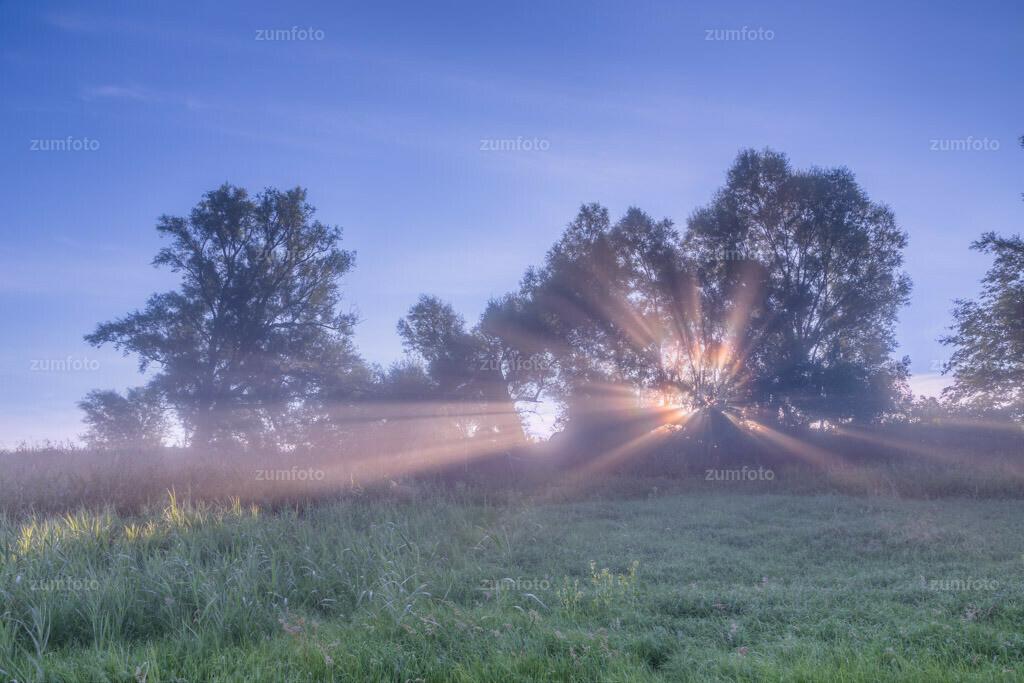 0-120814_0701-7946-53 | --Dateigröße 5760 x 3840 Pixel-- Sonnenstrahlen im Nebel durch Baum scheinend.