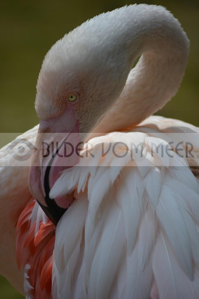 Famingo Bilder | Rosa Flamingo Bilder