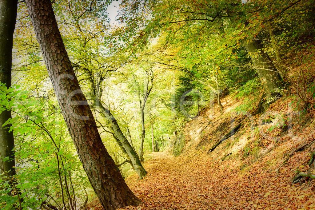 Mystischer Herbstwald  | fotografiert in der Vulkaneifel (Vulkaneifel)