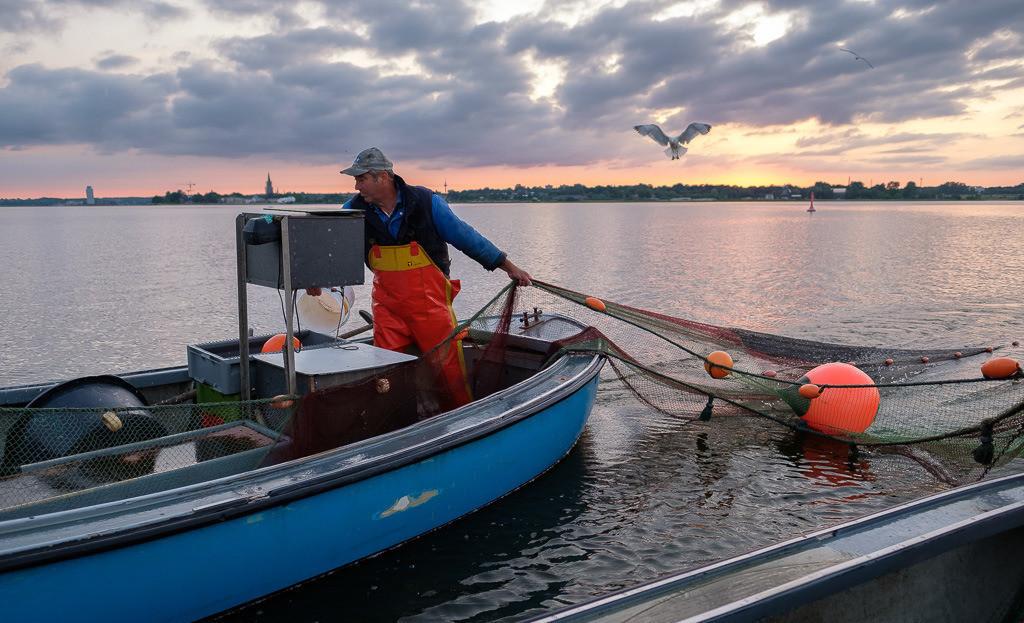 Wadenfischen auf der Schlei © Holger Rüdel   Der Schleswiger Fischermeister Jörn Ross beim Einholen eines Wadennetzes auf der Kleinen Breite der Schlei. Höchste Konzentration ist gefragt. Jeder Griff muss sitzen.