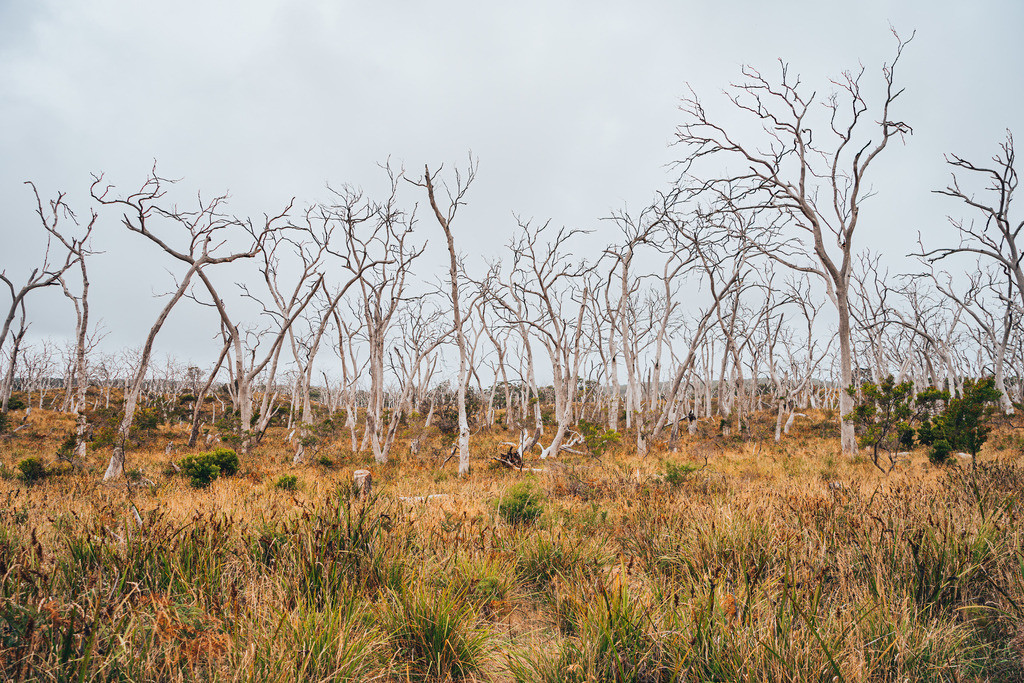 Great Otway National Park | Great Otway National Park