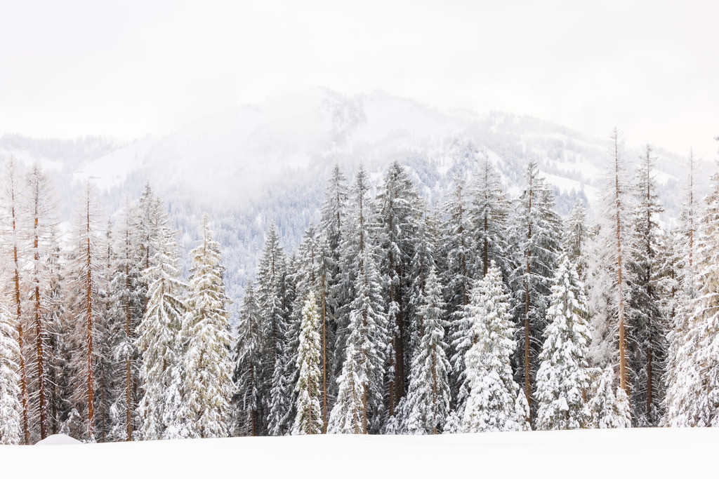 Forest in snow | I wonder what animals are in this snowy mountain forest?