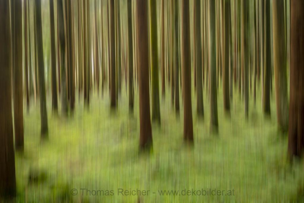 Sommerwald 1