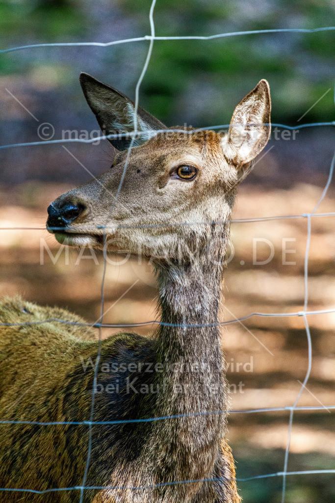 Wildpark-Kaiserslautern_20210918_0894