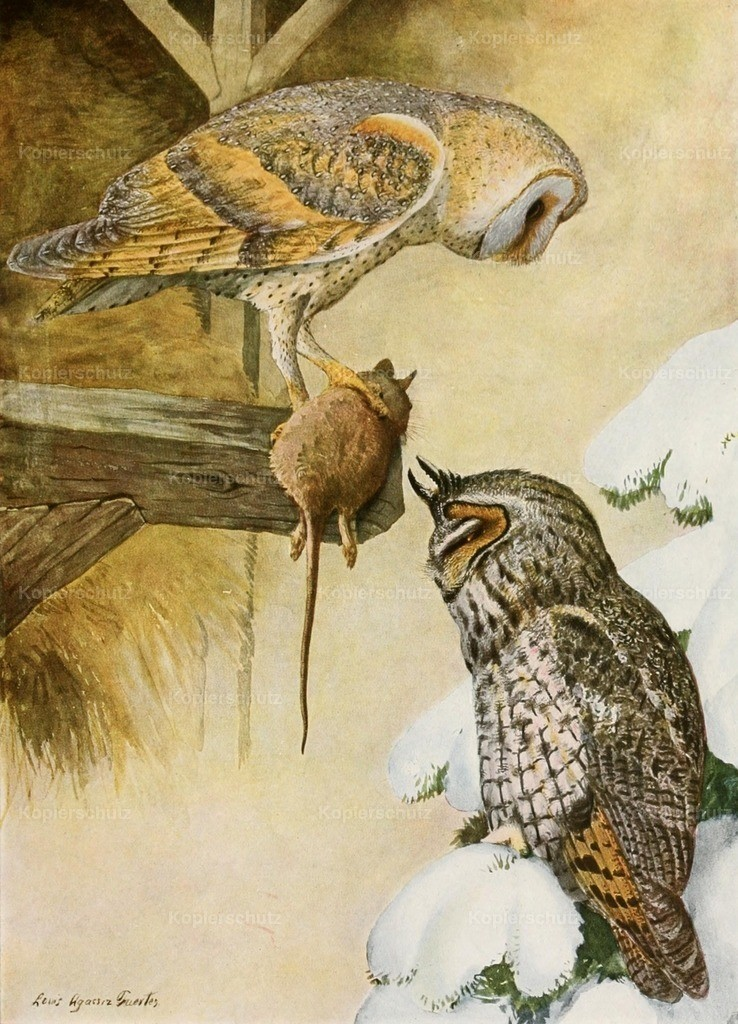 Fuertes_ L.A. (1874-1927) - Birds of America 1923 - Barn _ Long-Eared Owls