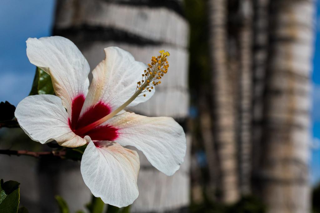 Riech an mir! | Die Blüte betrauert ihr Verblühen nicht. Sie weiß, ewige Blüte trägt niemals Frucht! Gudrun Zydek