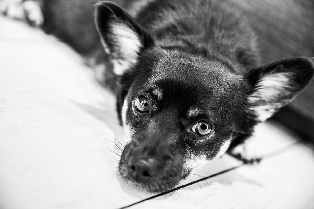dogs--elmar.pics_8572