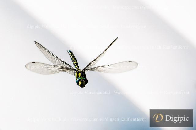 Libelle 3 - Vorschaubild | Libelle im Flug
