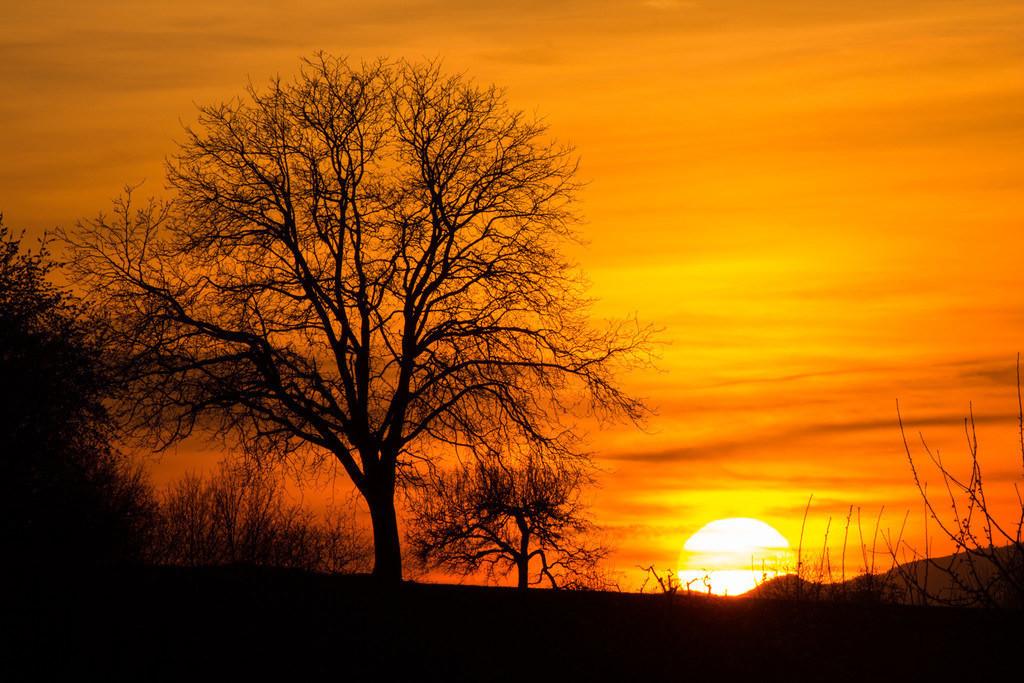Sunset with a large tree | Sunset with a large tree