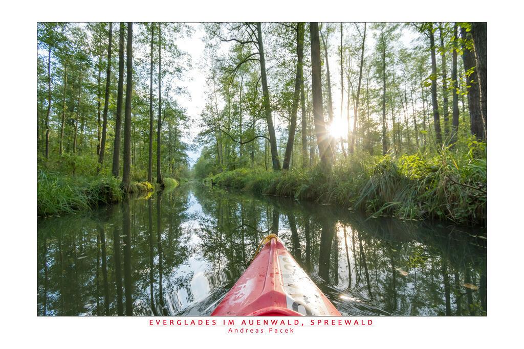 Everglades im Auenwald, Spreewald | Die Serie 'Deutschlands Landschaften' zeigt die schönsten und wildesten deutschen Landschaften.