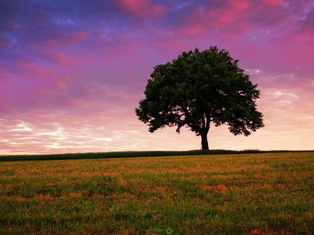 tree@summer