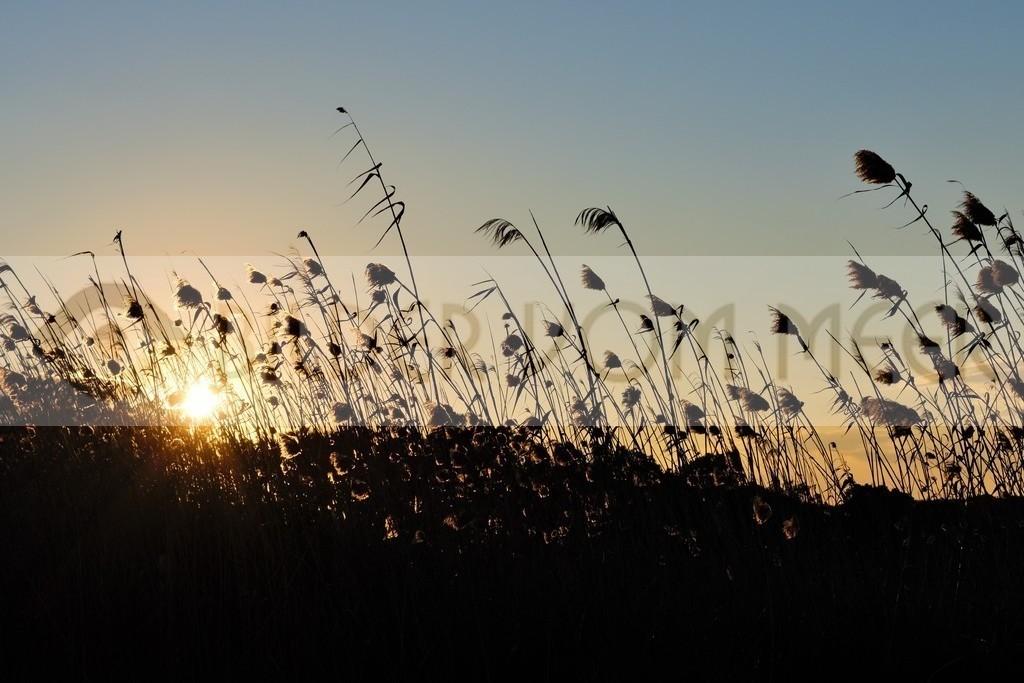 Bilder Sonnenuntergang | letzte Sonnenstrahlen
