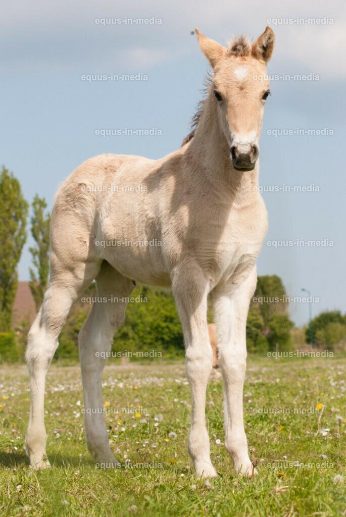 20100514-DSC_2354 | Henson Pferd Fohlen auf der Weide