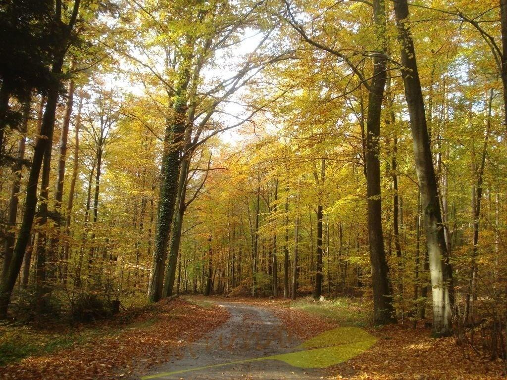 Herbstfreudewald