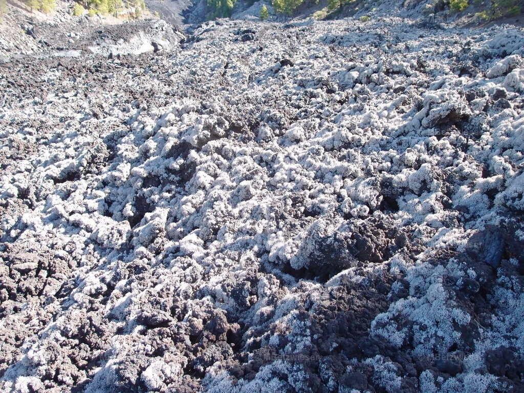 P1217577 | Lava von Moosen und Flechten bedeckt