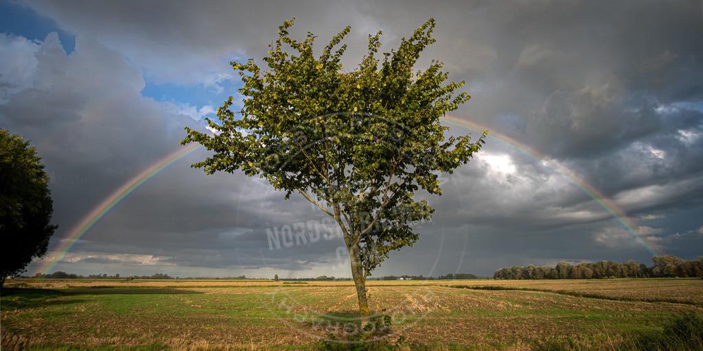 _MGC2573-HDR | Rainbow Tree