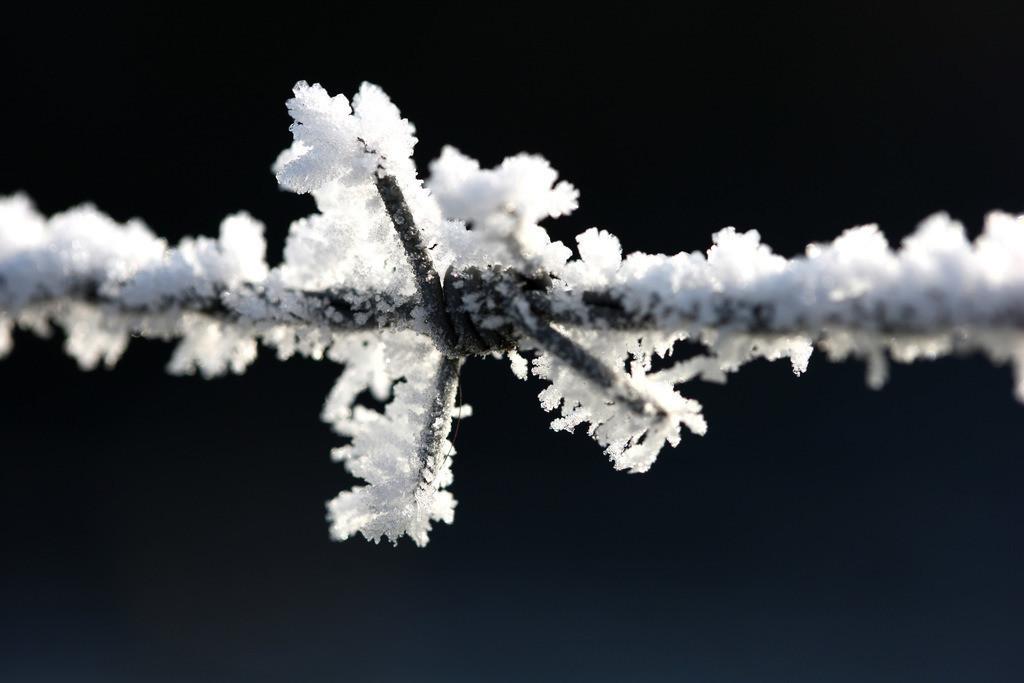 Winter | DEU, Bundesrepublik Deutschland: Winter, Eiseskaelte, Eiskreistalle, Raureif, gefrorene Luftfeuchtigkeit auf Pflanzen und Gegenstaenden.