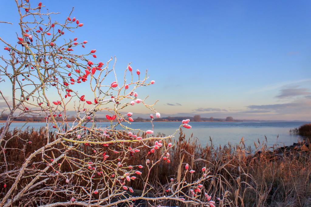 Sieseby an der Schlei | Sieseby an der Schlei im Winter